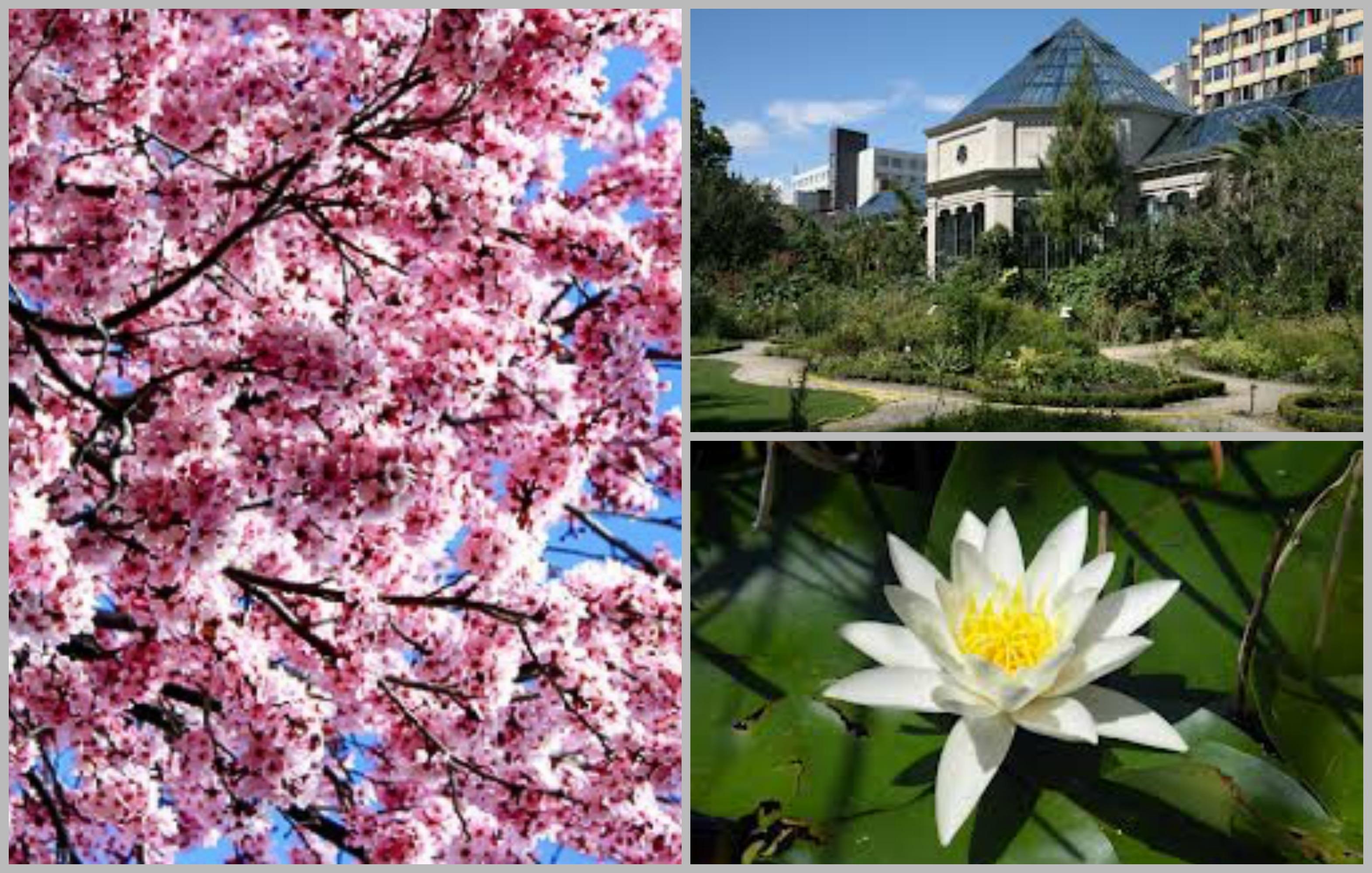 jardin collage